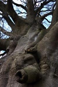 boom broekhuizen