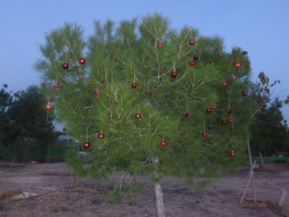 kerstboom op camperplaats