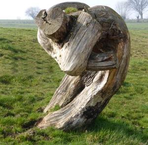 wat bomen allemaal kunnen vertellen