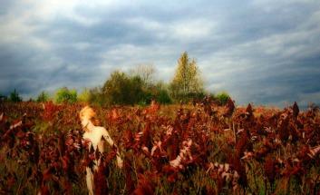 in het veld