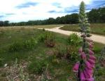 een bijzondere plant is de dophei. komt maar in een paar plekken van Nederland voor