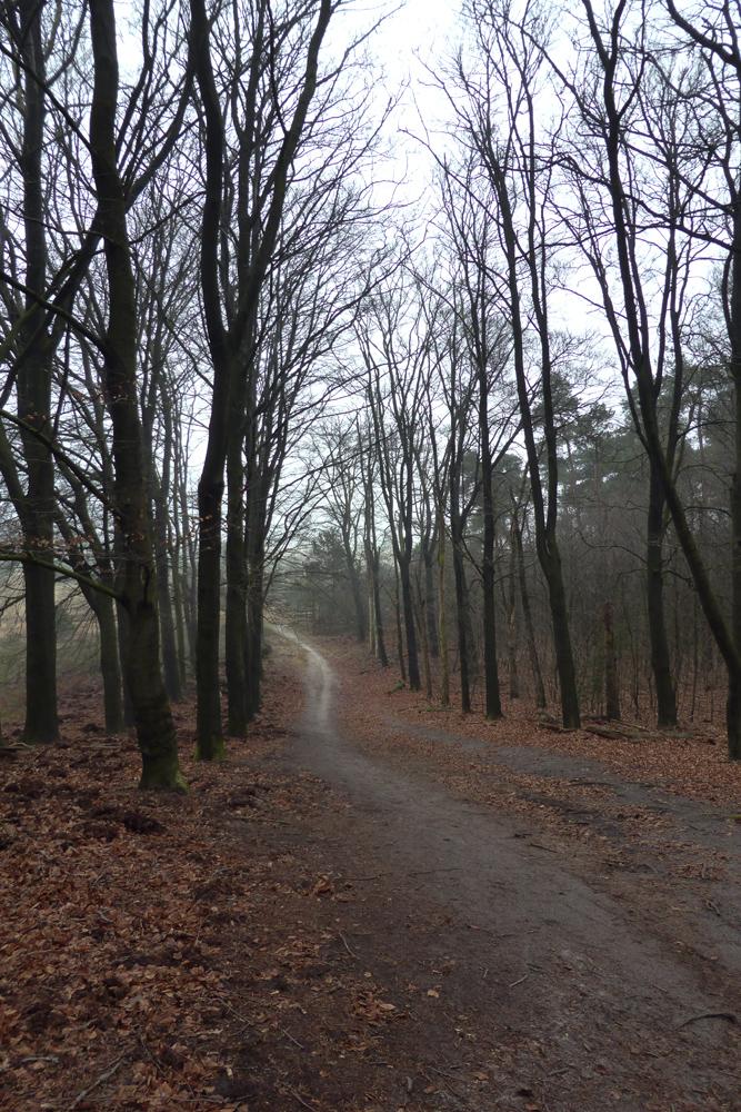 kootwijk bomen