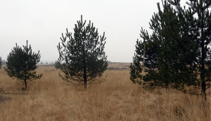 kootwijk drie bomen